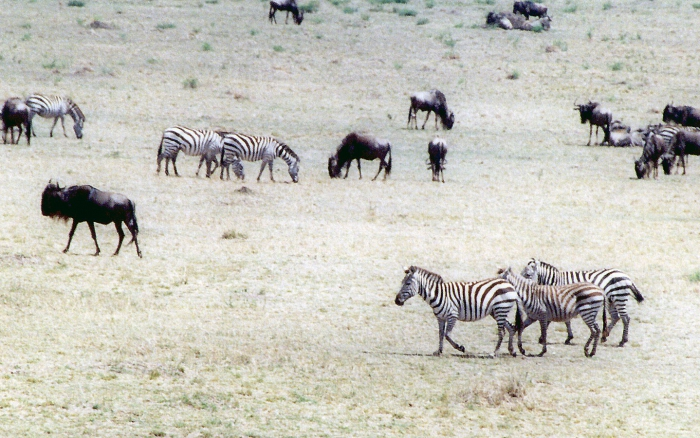 Utsikt över Masai Mara, Kenya.